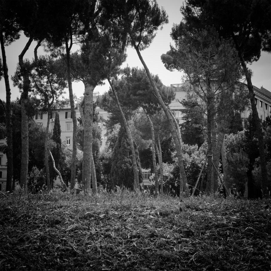 64_Roma